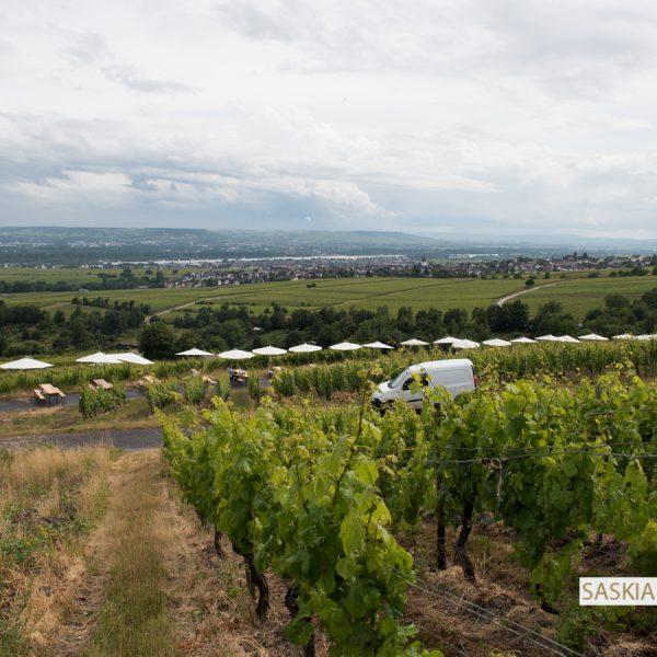 Riesling Picknick 2016 - Weinevent bei Hallgarten